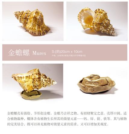 金蟾螺贝壳摆件